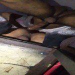 Dotadão enchendo o rabo do branquinho de porra